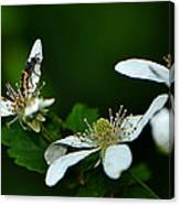 Wild Berry Blossoms And Friend Canvas Print