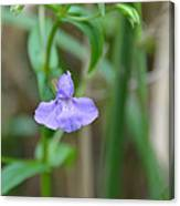 Wild Blue Orchid Canvas Print