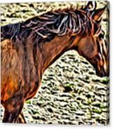Wild Bronc Canvas Print
