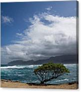 Wild Coast - Laie Point - North Shore - Hawaii Canvas Print