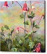 Wild Columbines Canvas Print