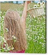Wild Daisy Field Canvas Print