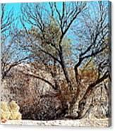 Wild Desert  Canvas Print