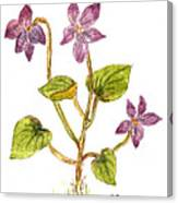 Wild Dog Violet Canvas Print