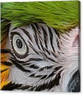Wild Eyes - Parrot Canvas Print