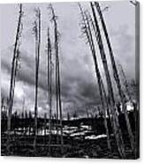 Wild Fire Aftermath In Black And White Canvas Print