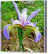 Wild Flag - Iris Versicolor Canvas Print