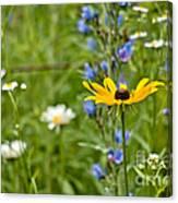 Wild Flower Delight Canvas Print