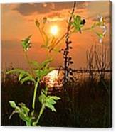 Wild Flower Ia Mlo Canvas Print