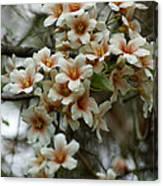 Wild Flowering Beauty Canvas Print
