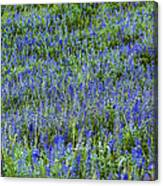 Wild Flowers Blanket Canvas Print