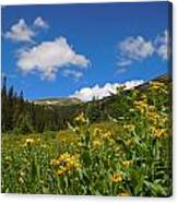 Wild Flowers In Rocky Mountain National Park Canvas Print