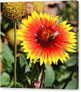 Wild Flowers Sierra Ancha Mountains Canvas Print