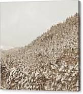 Wild Forest Retro Canvas Print