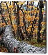 Wild Forest Canvas Print