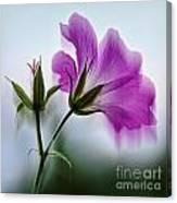 Wild Geranium Abstract Canvas Print
