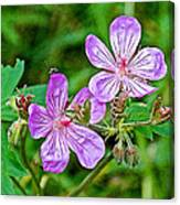 Wild Geranium On Trail To Swan Lake In Grand Teton National Park-wyoming Canvas Print