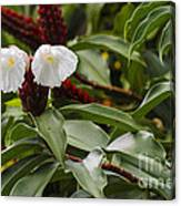 Wild Ginger Blooms Canvas Print