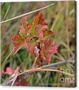 Wild Gooseberry Leaves Canvas Print