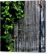 Wild Grape Vine Door Canvas Print