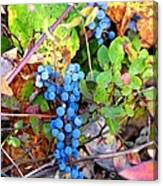 Wild Grapes Canvas Print