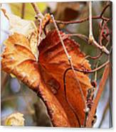 Wild Grapevine Leaf Canvas Print