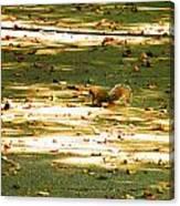 Wild Gray Squirrel Canvas Print