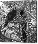 Wild Hawaiian Parrot Black And White Canvas Print