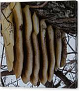Wild Honey Bee Nest Canvas Print