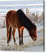 Wild Horse At Sunrise Canvas Print