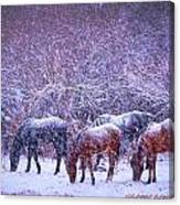 Wild Horse Christams Canvas Print