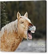 Wild Horse Chuckle Canvas Print