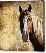 Wild Horse Fade Canvas Print