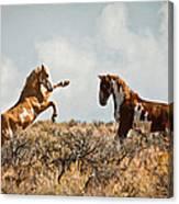 Wild Horse Fight Canvas Print