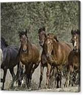 Wild Horse Herd Canvas Print