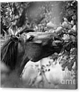 Wild Horse In Dunes Canvas Print