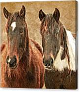 Wild Horse Pair Canvas Print