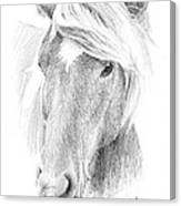 Wild Horse Pencil Portrait Canvas Print
