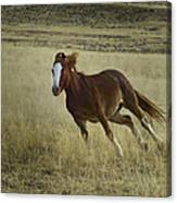 Wild Horse Running-signed-#7273 Canvas Print