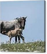 Wild Horses-animals-image-19 Canvas Print