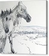 Wild Horses Drawing Canvas Print