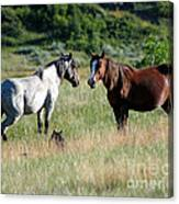 Wild Horses In Medora Canvas Print