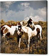 Wild Horses Mother And Child Canvas Print