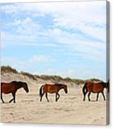 Wild Horses Of Corolla - Outer Banks Obx Canvas Print