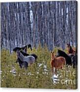 Wild Horses Of The Ghost Forest Canvas Print