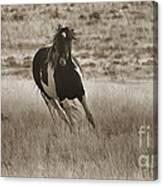 Wild Horses-sepia-signed-#7288 Canvas Print