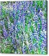 Wild In Blue Canvas Print