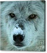 Wild Intensity Canvas Print