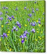 Wild Iris Patch Canvas Print
