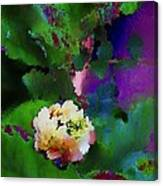 Wild Jasmine Canvas Print